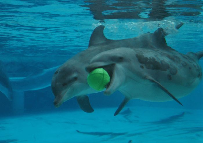 How To Become a Dolphin Trainer – Marine Mammal Trainer