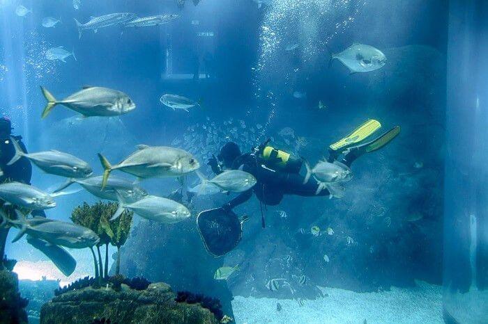 Marine Biologist Salary Guide & Career Outlook   Salaries HUB
