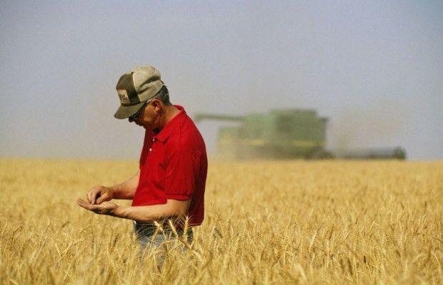 Ohio Farm Service Agency seeks independent crop loss adjustment ...