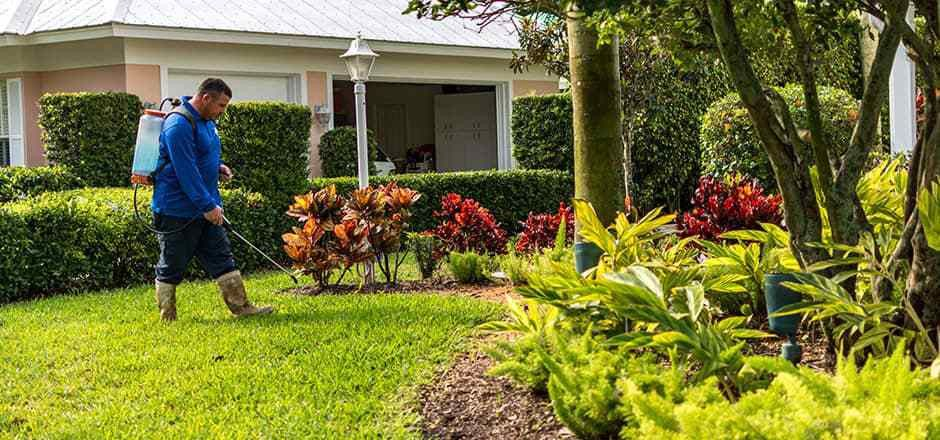 Winter Lawn Stress In Florida