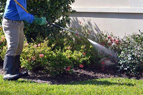 Premium Lawn Care Services — DSC Landscaping