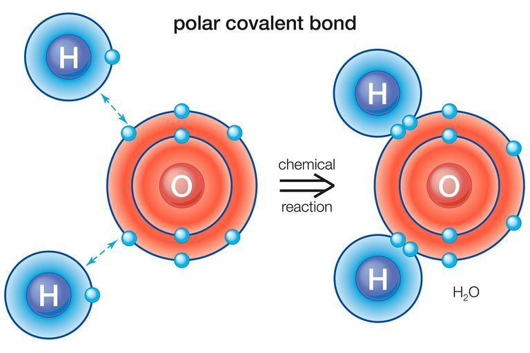 What Is a Polar Bond? Definition and Examples