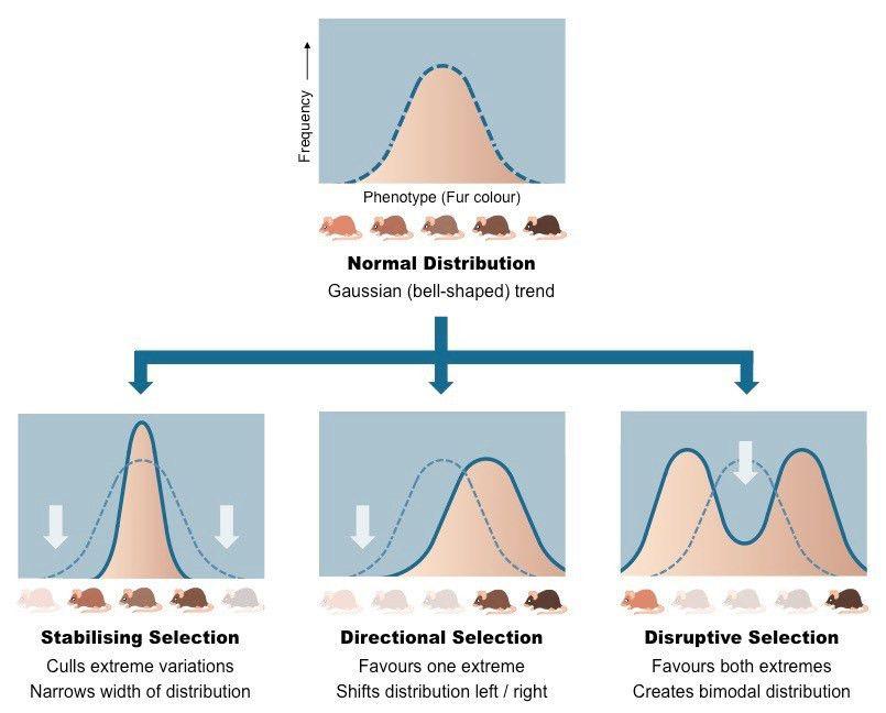 Types of Selection | BioNinja