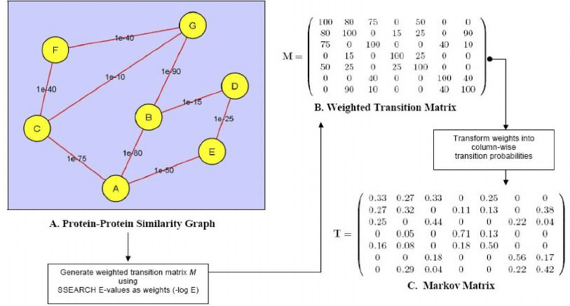 Process of generating a Markov matrix input for MCL. ( A ) Example ...