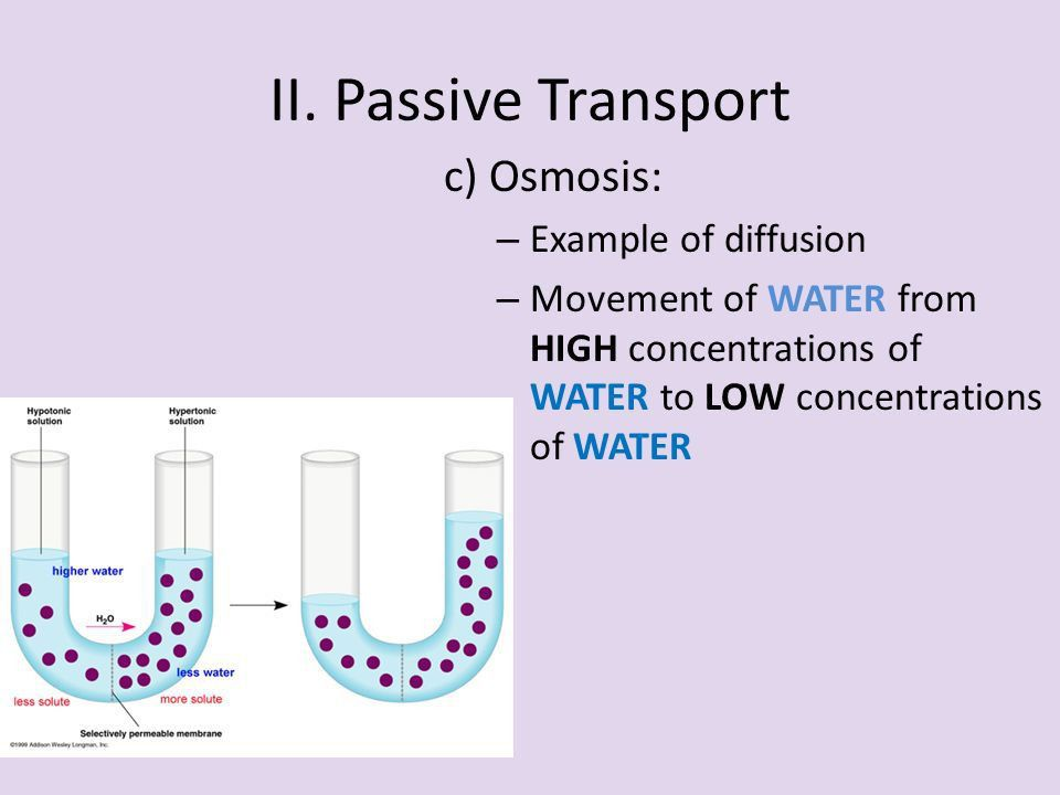 Active and Passive Transport. Notes Outline I. Compare and ...