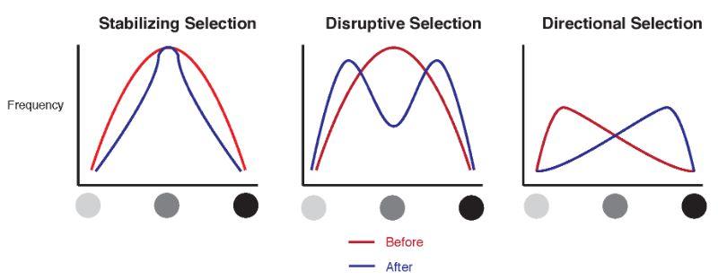Evolution's Perspective on Business Disruption | Peter Kotvis ...