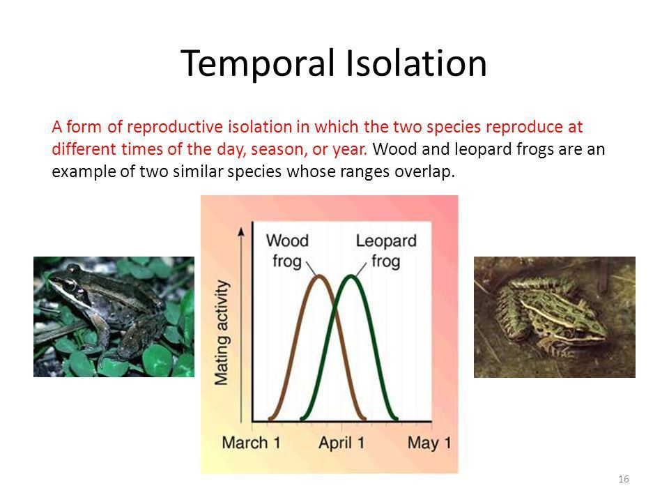 Population Evolution Biology Chapter ppt video online download