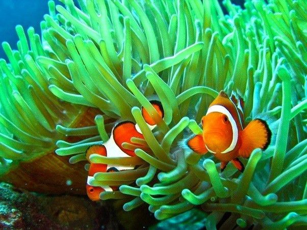 What are some examples of a symbiotic relationship in the ocean ...