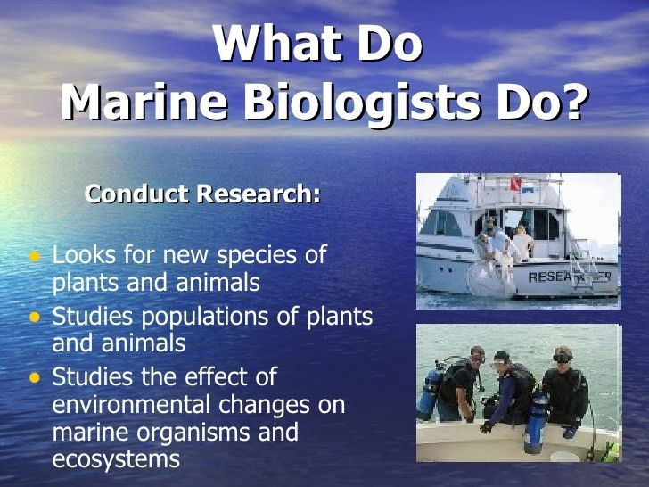 salaries marine careers. in the case of marine biology the ...