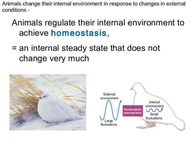 Animal anatomy and homeostasis ss