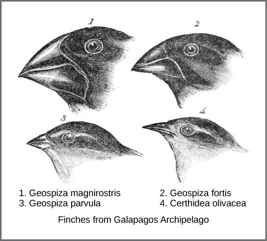 Understanding Evolution | Boundless Biology