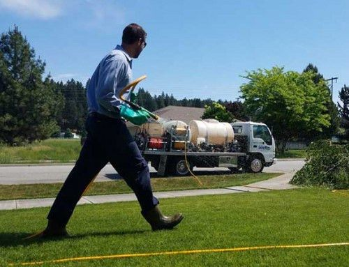 Living Water - Pest Control Technician - Living Water Lawn & Tree Care
