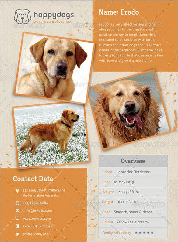 8+ PSD Lost Dog Flyer Templates | Free & Premium Templates