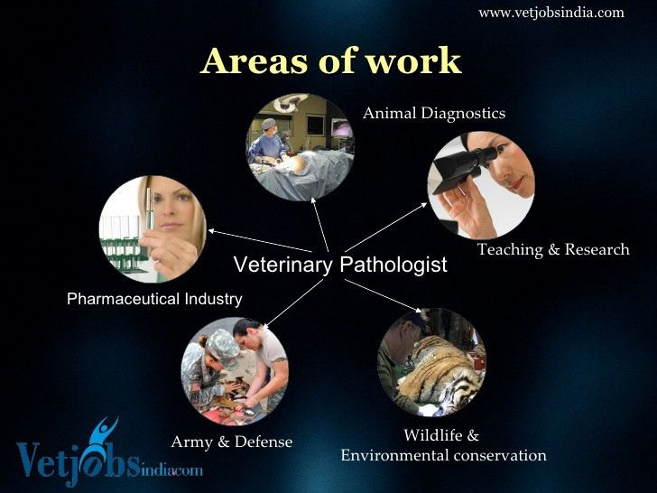 Career in Veterinary Pathology