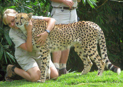 Becoming a Zookeeper: Salary and Duties | ToughNickel