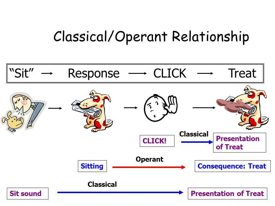 Deconstructing the Click – The Science Dog