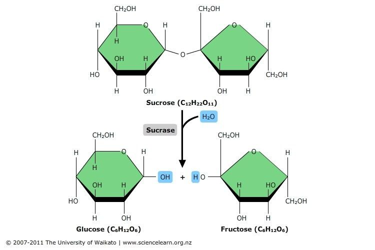 Hydrolysis reaction — Science Learning Hub