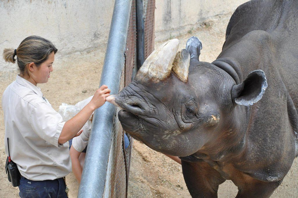 Everything I Need to Know I Learned as a Zookeeper | Rover.com