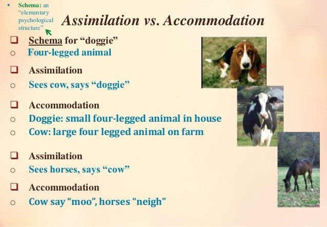 Assimilation vs accommodation-final
