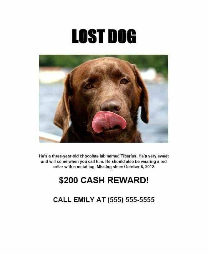Lost Dog Template. lost and found cat flyer humane society of ...