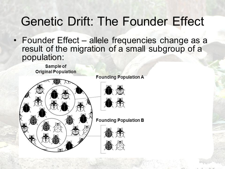 Natural Selection on Polygenic Traits - ppt video online download