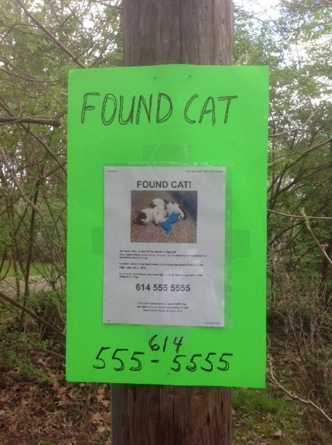 Found Pet: Action Plan | Pet FBI