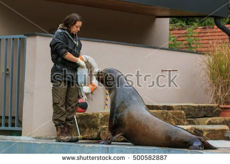 Zookeeper Stock Images, Royalty-Free Images & Vectors | Shutterstock