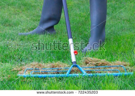 Dry Lawn Stock Images, Royalty-Free Images & Vectors | Shutterstock