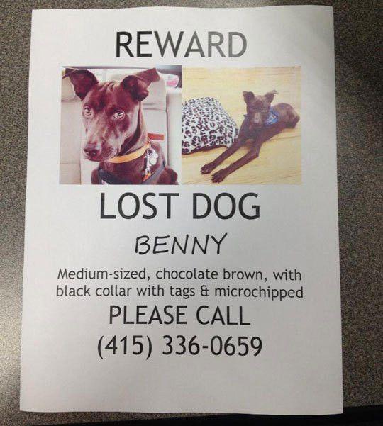10 Best Images of Lost Pet Flyer - Lost Missing Dog Flyer, Lost ...