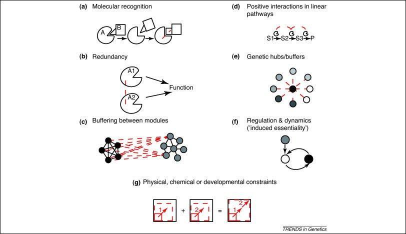 Molecular mechanisms of epistasis within and between genes: Trends ...