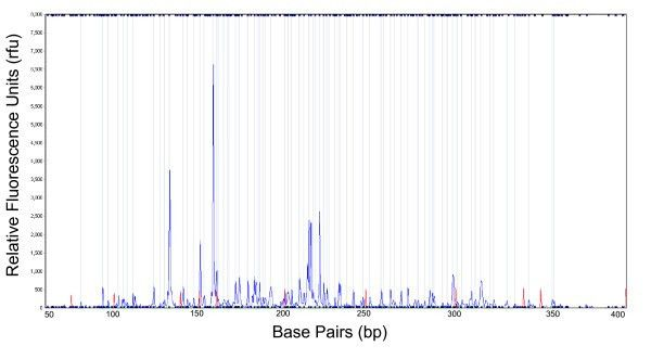An example of allele-call data. The y-axis is intensity of the ...