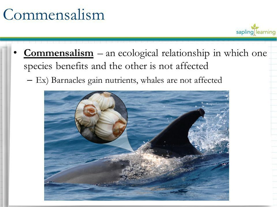 Symbiosis Mutualism | Commensalism | Parasitism Learning ...