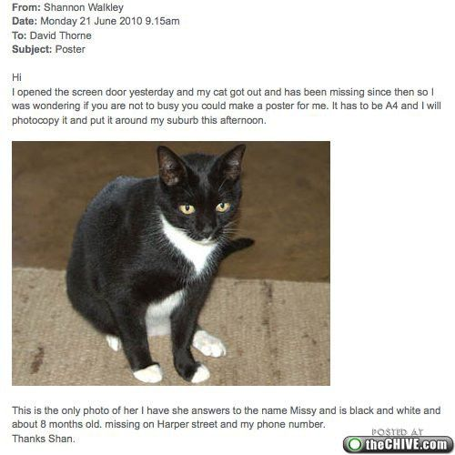 MIssing cat email chain : theCHIVE