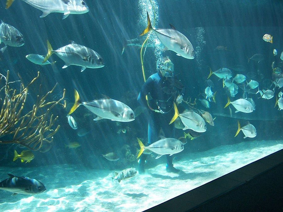 Aquarist Job Description