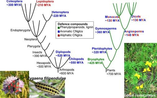 Co-evolution of cyanogenic glucosides in Lotus plants and Zygaena ...