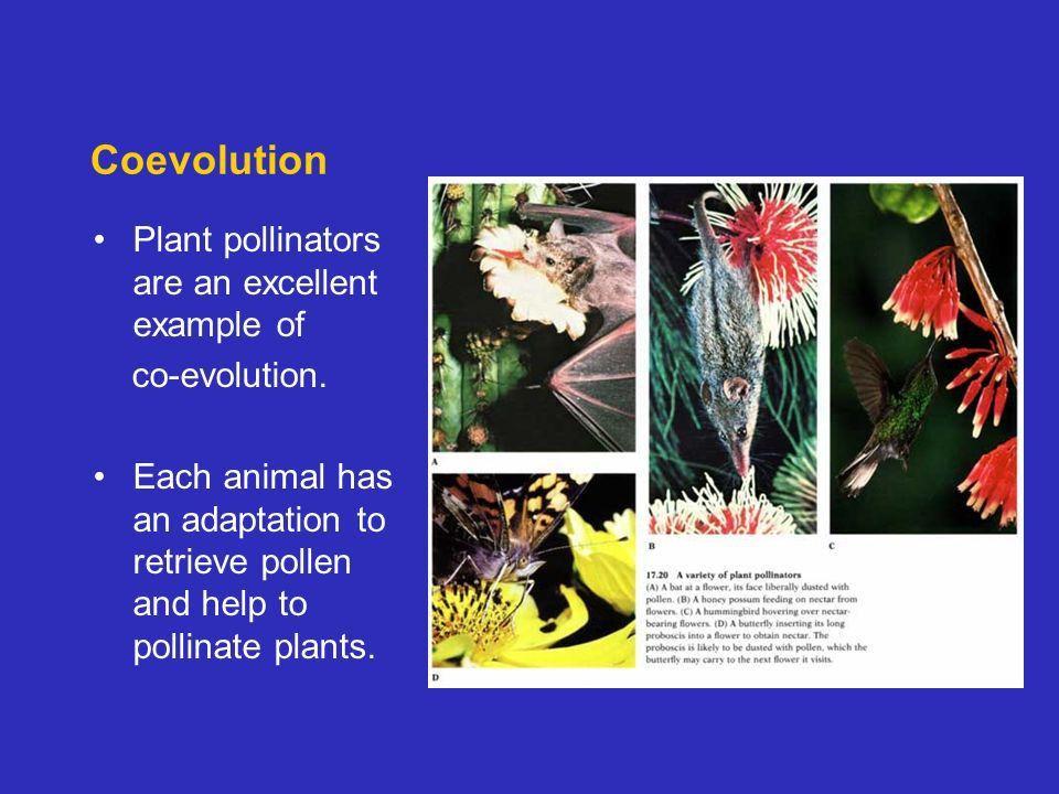 EVOLUTION Lynn English High School Biology Ms. Mezzetti. - ppt ...