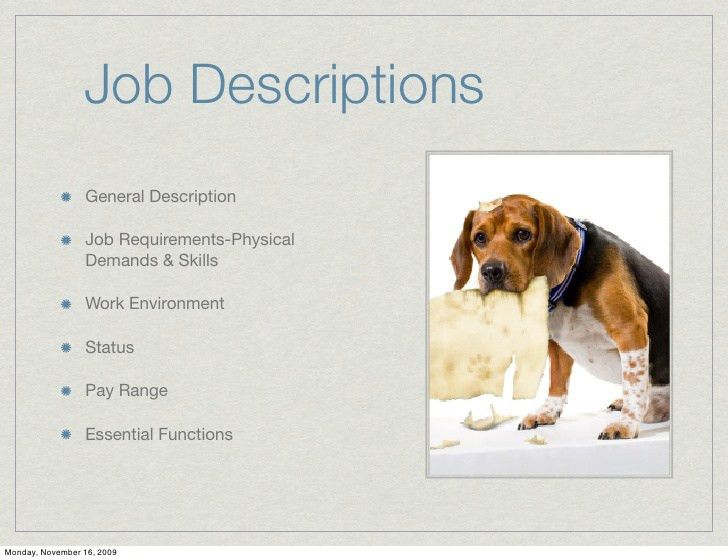 Job Responsibilities Of A Veterinarian