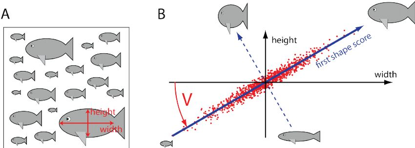 Illustration of principal component analysis. A. As a minimal ...