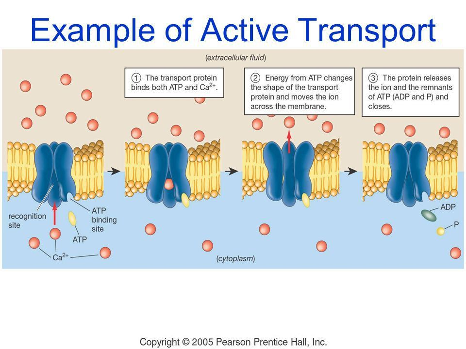Cell Membrane Structure & Function - ppt video online download