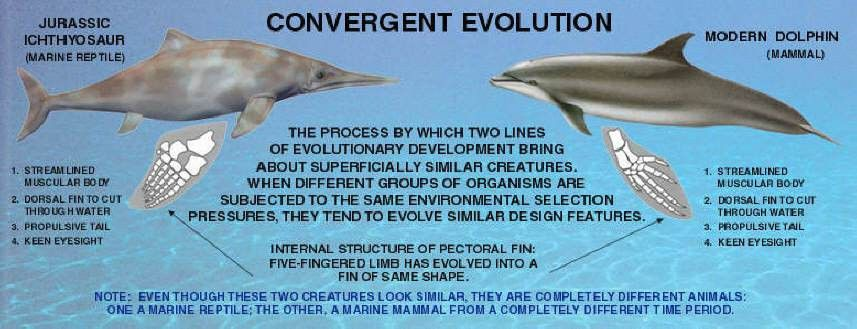 The curiously limited argument from convergent evolution raises an ...