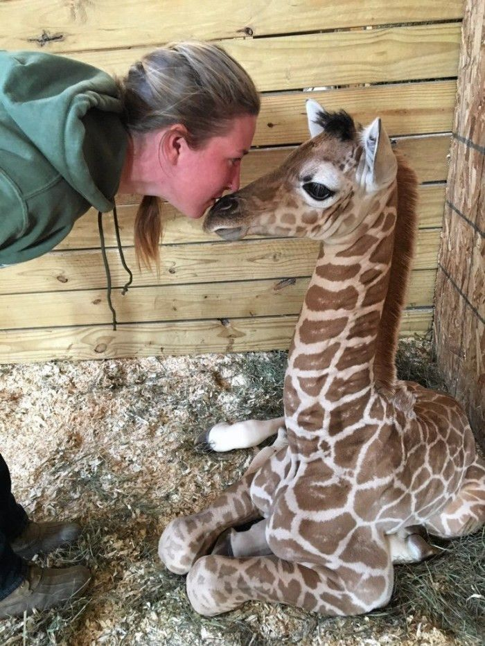 460 best animal training images on pinterest ...