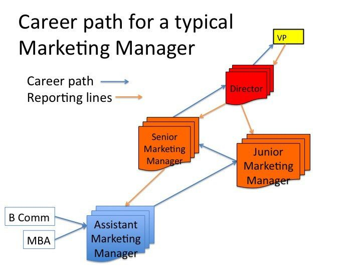 Typical employee career path | Marketing for Nonprofits