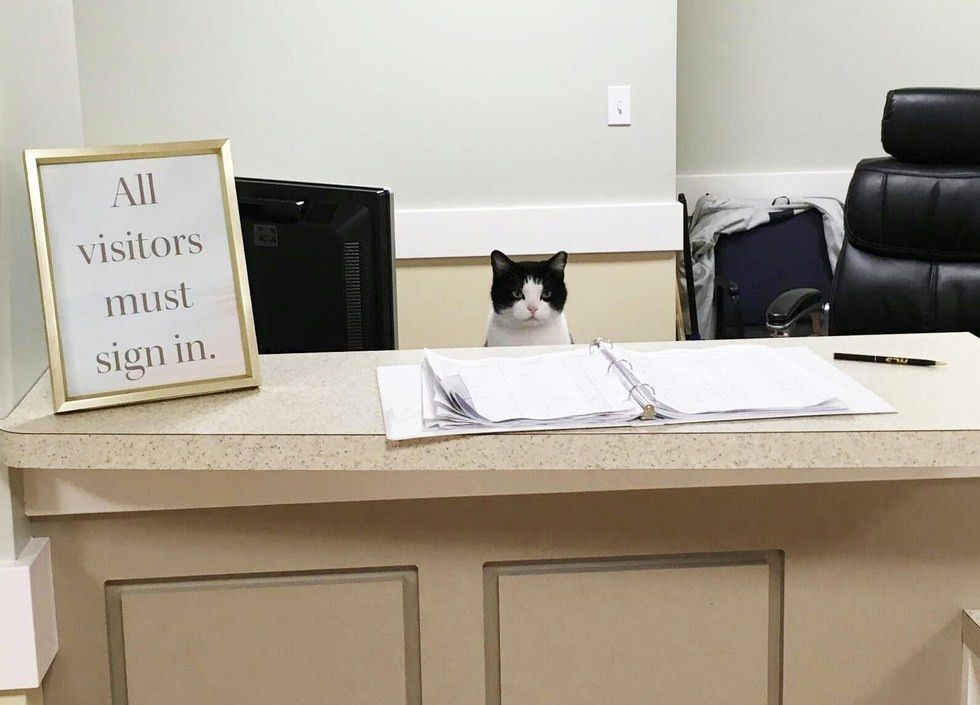 Stray Cat Wanders into Nursing Home and Decides to Work There ...