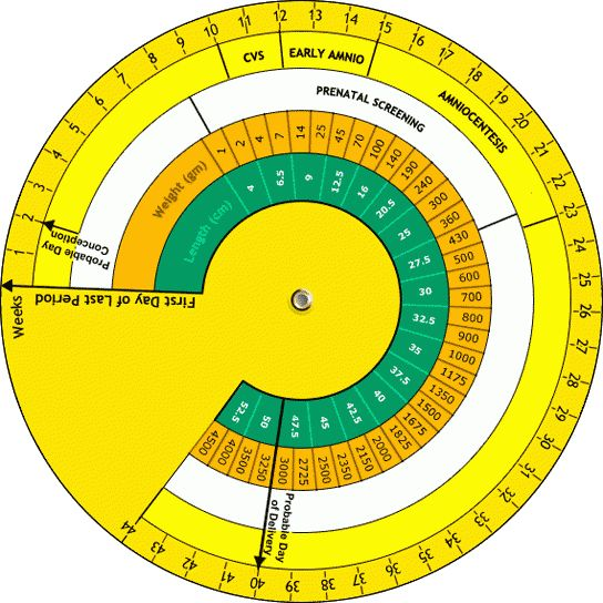 Pregnancy Wheel | Calculating Due Date with Pregnancy Wheel