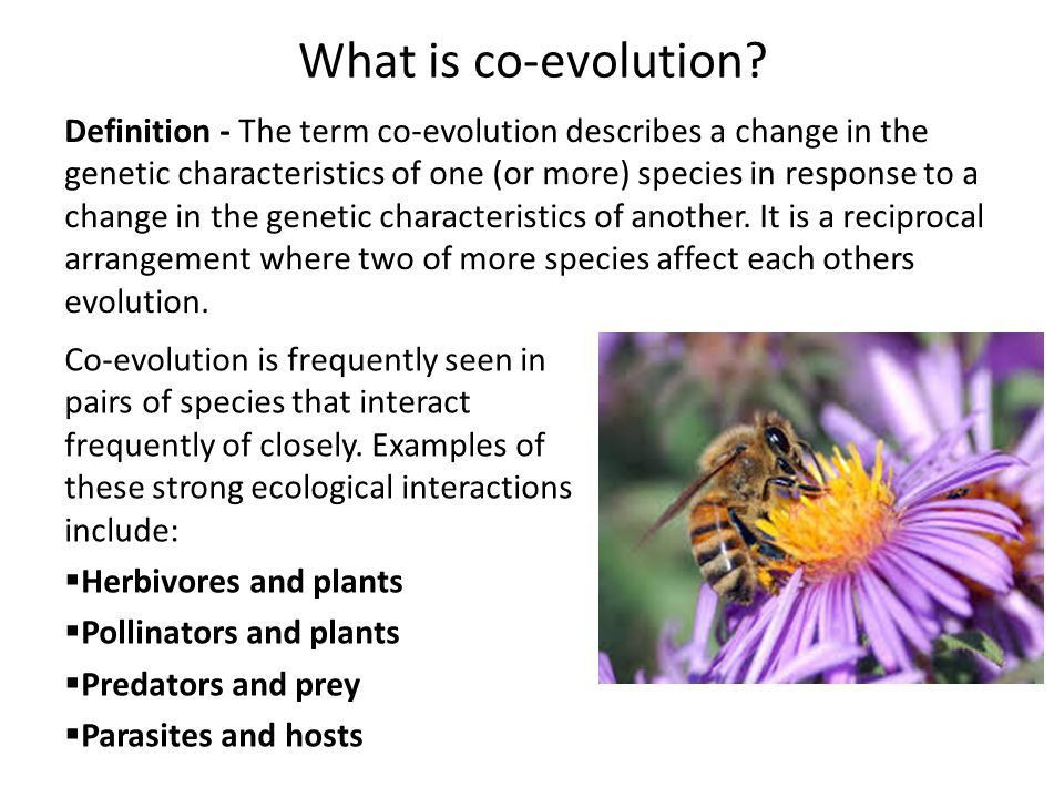 Evolution: co-evolution of the Red Queen CfE Advanced Higher ...