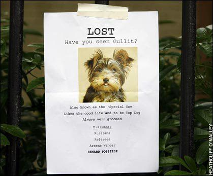 Top 5 Things You Can Do to Find Your Lost Pet – PawshPal