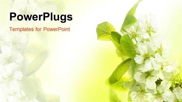 PowerPoint Template: Spring Blossoms with white flowers and green ...
