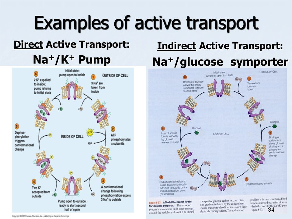 Transport Across Membranes - ppt download