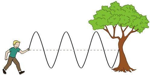 Transverse and Longitudinal Waves, Speed of Wave Motion | CK-12 ...
