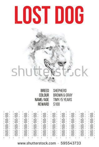 Pet Promotion Stock Images, Royalty-Free Images & Vectors ...